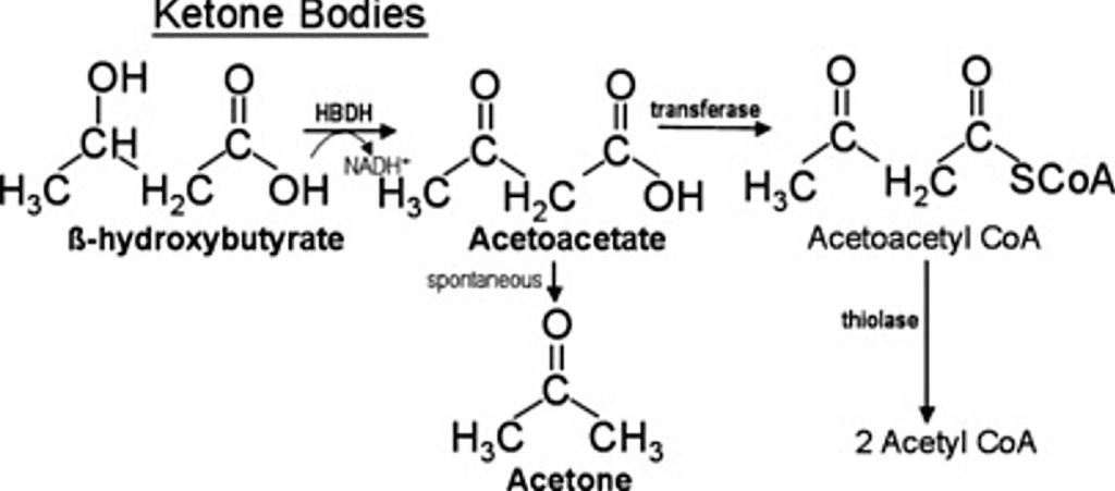 Aceton bildas när delar av acetoacetat bryts ner.